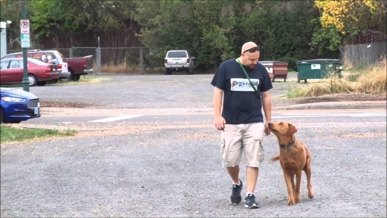 Dog Trainers Portland